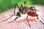 Dịch bệnh sốt xuất huyết có thể đẩy lùi nếu bạn làm những việc này